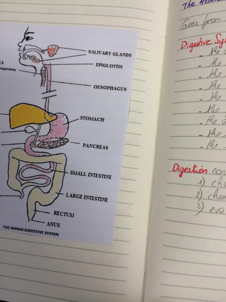 studies2